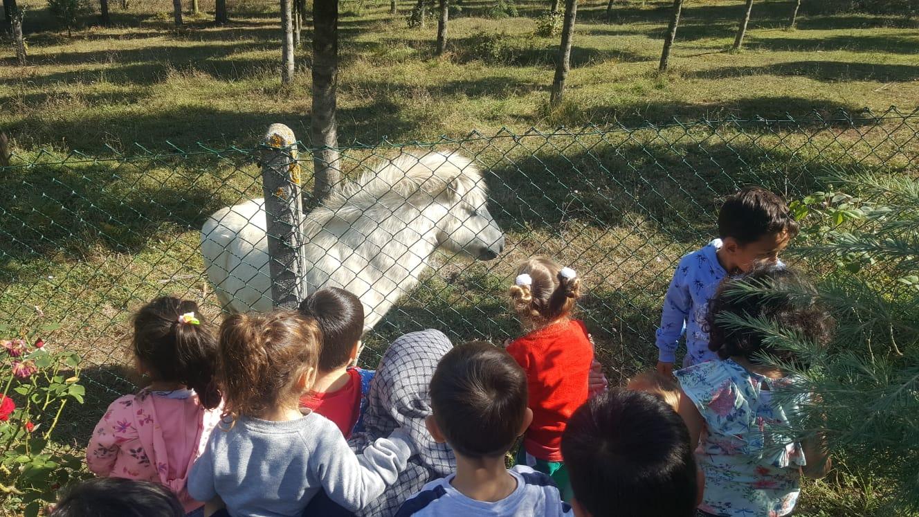 4 Ekim Dünya Hayvanları Koruma Günü Etkinliği Gerçekleştirildi