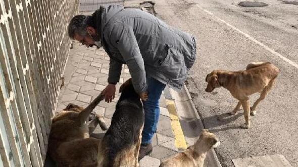Mengen Gökçesu Beldesindeki Uyuz ve hasta köpekler tedavi edilip yaşam alanlarına bırakılacak