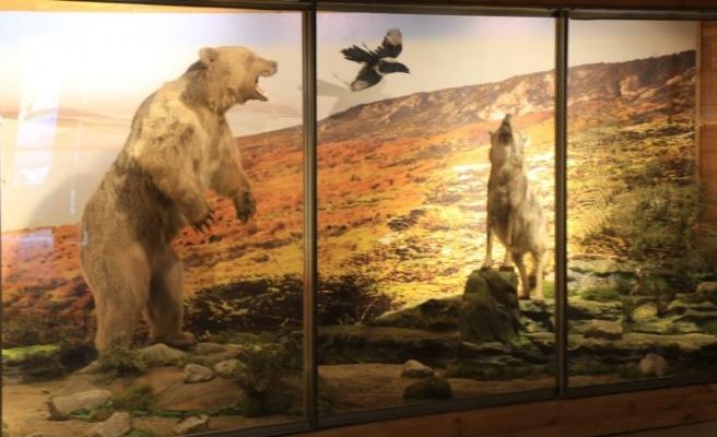Bölgedeki yaban yaşamı bu müzede