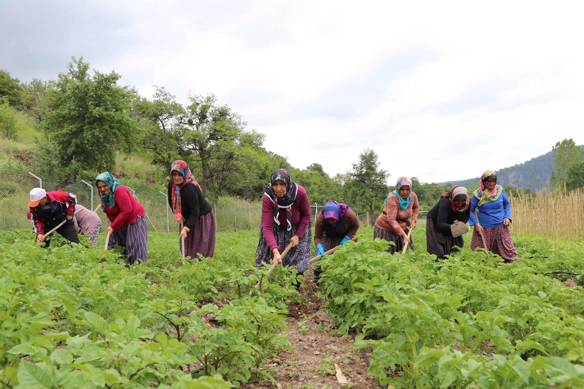 Bolulu çiftçilerin ata tohumlarına olan ilgisi her geçen gün artıyor
