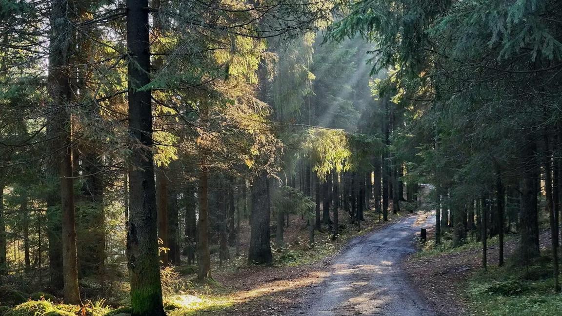 Bolu'da ormanlara giriş çıkış ve piknik yapmak yasaklandı
